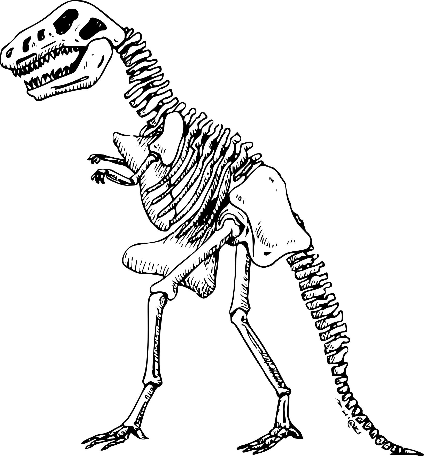 Coloriage Dinosaure Squelette À Imprimer Sur Coloriages concernant Coloriage Dinosaure