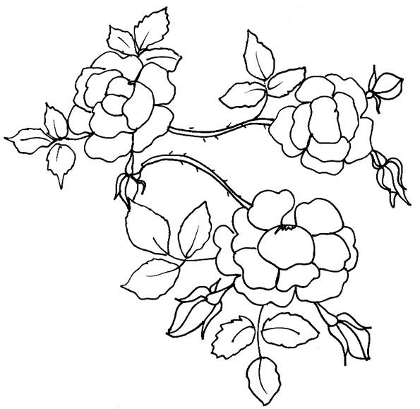 Coloriage D'Une Branche De Roses - Tête À Modeler dedans Coloriage D Une Rose