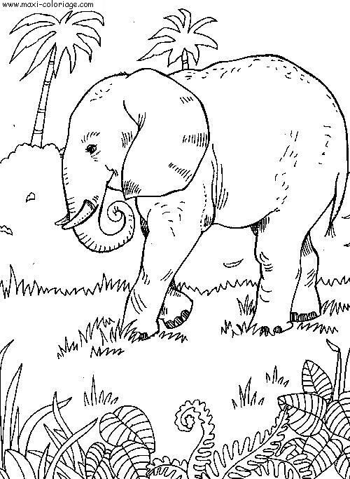 Coloriage Éléphant Dans La Nature Dessin Gratuit À Imprimer encequiconcerne Coloriage Animaux De La Savane