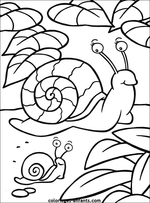 Coloriage Escargot Et Son Bébé Dessin Gratuit À Imprimer encequiconcerne Coloriage Herisson A Imprimer Gratuit