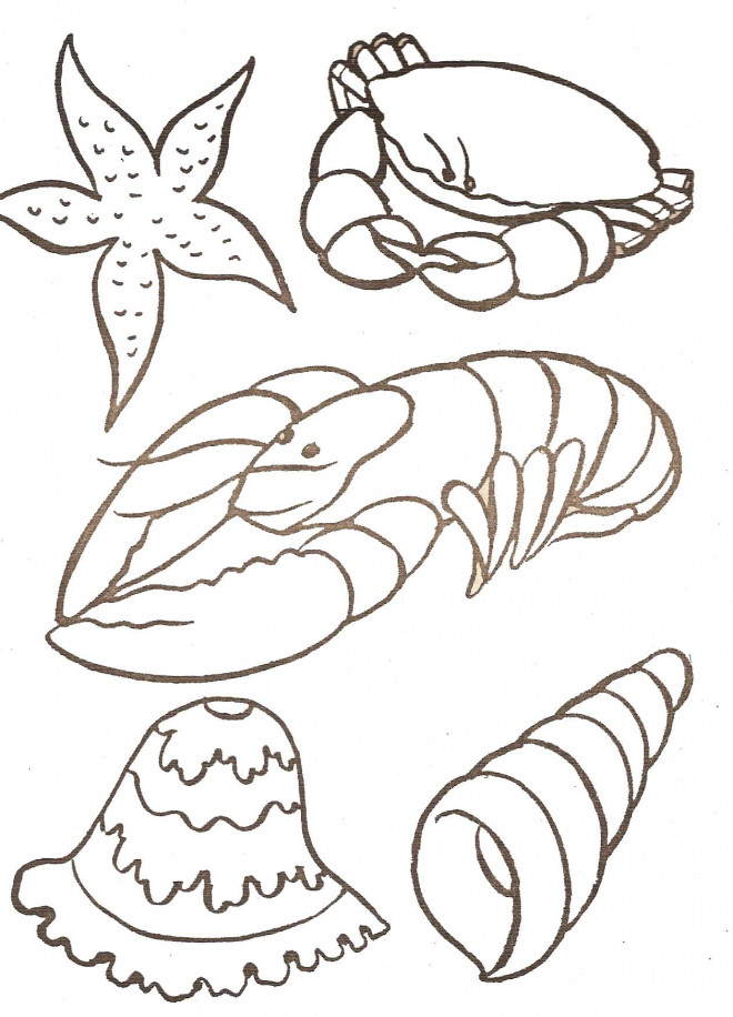 Coloriage Fruits De Mer Stylisé Dessin Gratuit À Imprimer concernant Coloriage Etoile De Mer