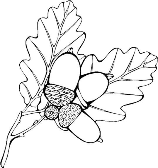 Coloriage Fruits Et Feuilles D'Automne Vecteur Dessin pour Feuille D Automne Coloriage