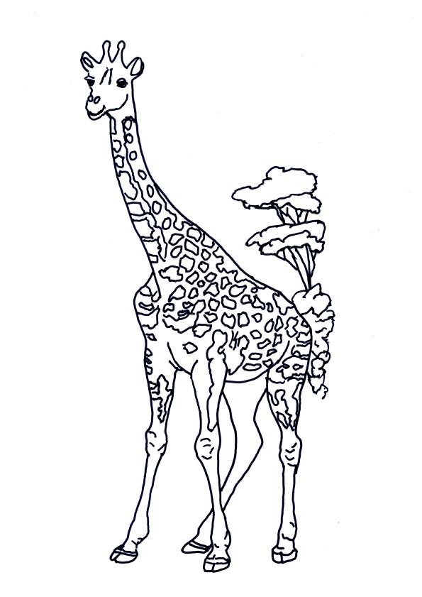 Coloriage Girafe Dans La Savane Dessin Gratuit À Imprimer destiné Dessin Girafe Simple