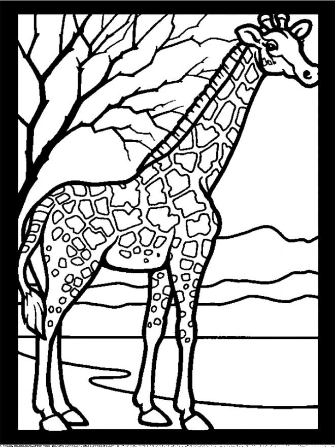 Coloriage Girafe Et Nature Dessin Gratuit À Imprimer serapportantà Dessin Girafe Simple