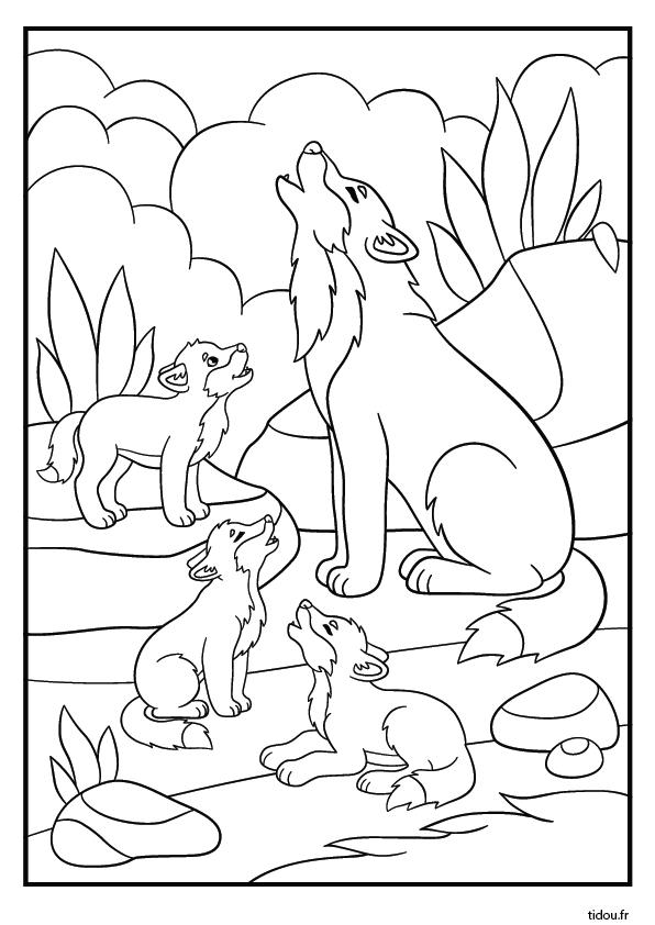 Coloriage Gratuit, Le Loup Et Les Louveteaux - Tidou.fr destiné Coloriage Gratuit
