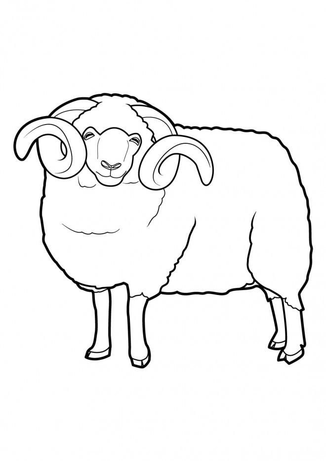 Coloriage Gros Mouton Dessin Gratuit À Imprimer intérieur Dessin Mouton Rigolo
