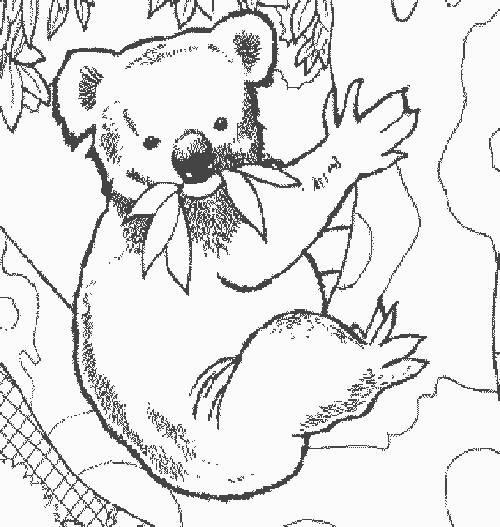 Coloriage Koala Facile Pour Maternelle Dessin Gratuit À serapportantà Coloriage Koala A Imprimer