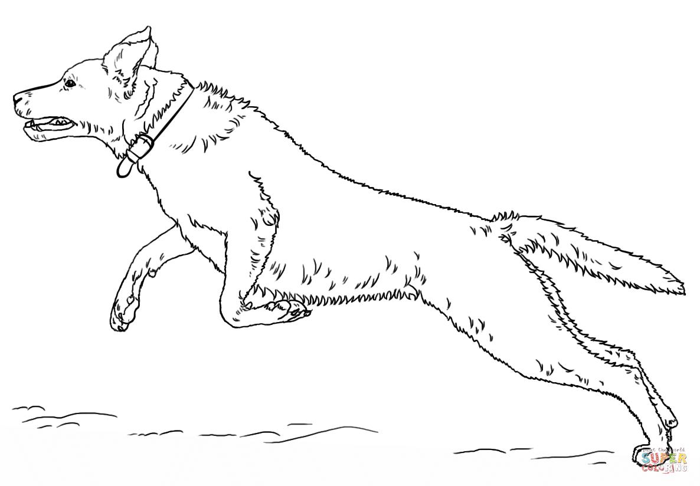 Coloriage - Labrador Retriever Sautant | Coloriages À encequiconcerne Coloriage Labrador A Imprimer