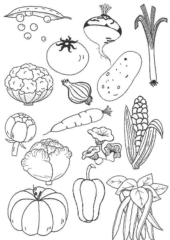 Coloriage Légumes En Couleur Dessin Gratuit À Imprimer intérieur Oloriage Potager A Imprimer