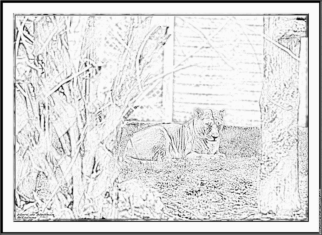 Coloriage Lionne 20100521 À Imprimer Pour Les Enfants - Dessin à Coloriage Lionne