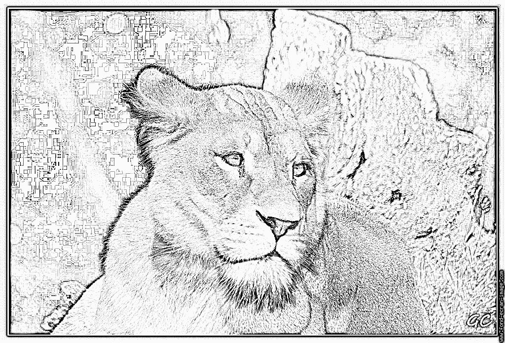 Coloriage Lionne Zoo De Jurques 0918 1024X695 À Imprimer encequiconcerne Coloriage Lionne