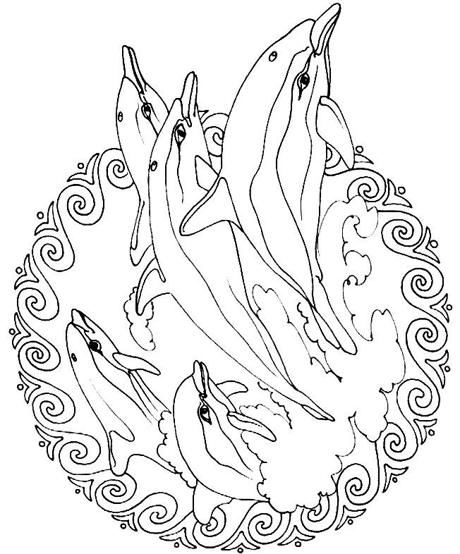 Coloriage Mandala Dauphins Dessin Gratuit À Imprimer concernant Coloriage Dauphin En Ligne