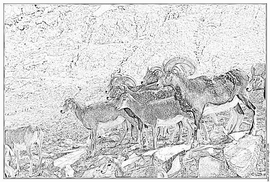 Coloriage Muflons Corse 3973 À Imprimer Pour Les Enfants destiné Dessin Mouflon