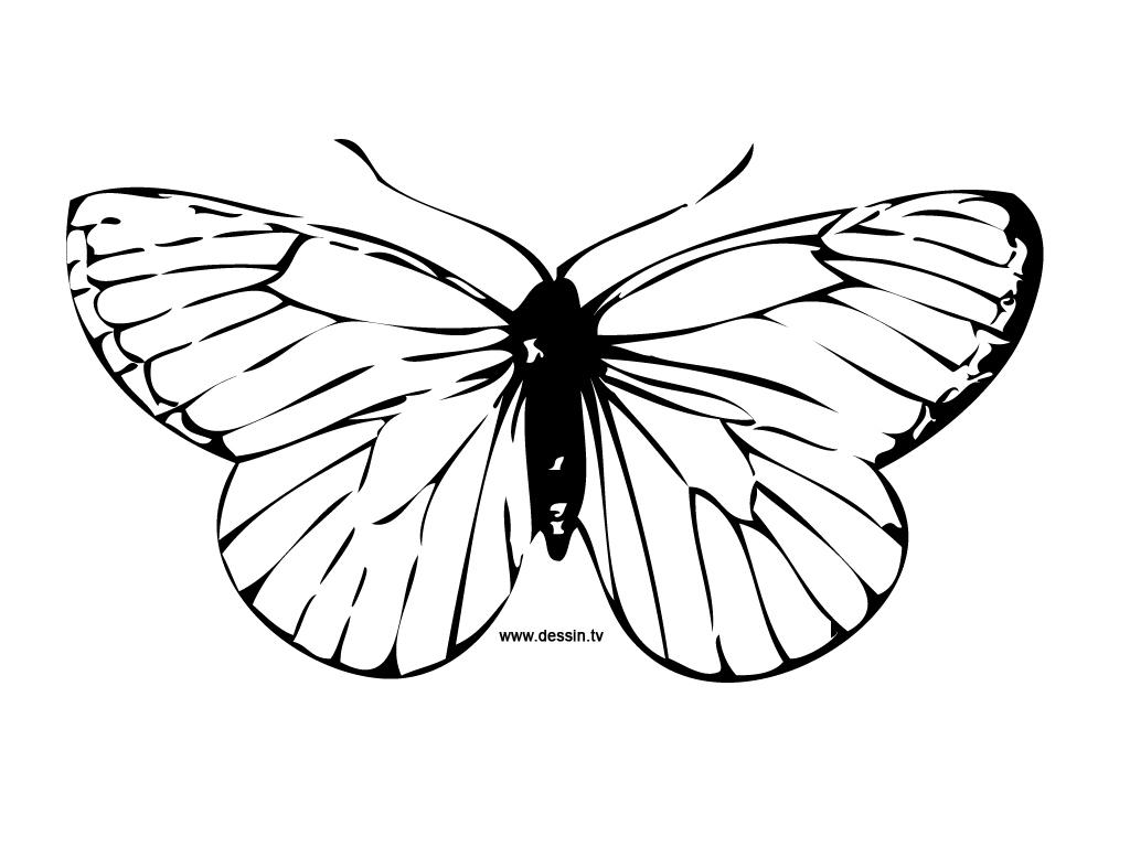 Coloriage Papillon destiné Dessin Petit Papillon