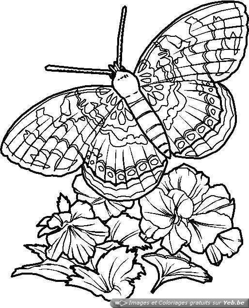 Coloriage Papillon Difficile En Ligne Dessin Gratuit À pour Coloriage En Ligne Difficile