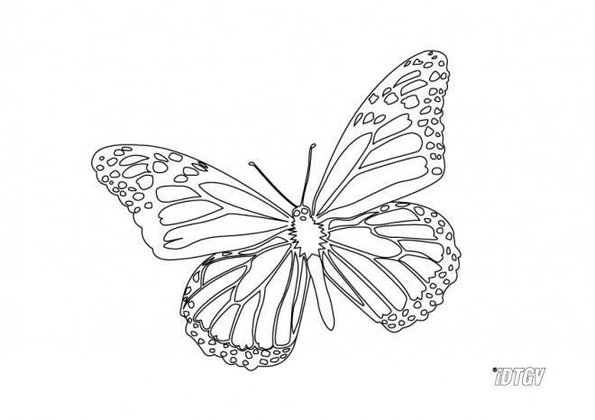 Coloriage Papillon Facile À Colorier Dessin Gratuit À Imprimer destiné Papillon Dessin Facile