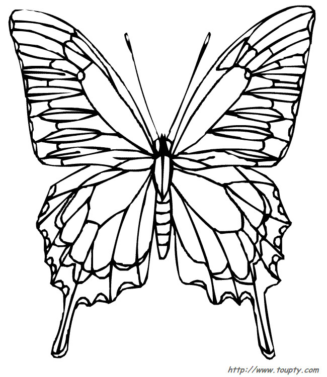 Coloriage Papillon Vue De Face Difficile Dessin Gratuit À serapportantà Coloriage De Papillon A Imprimer Gratuit