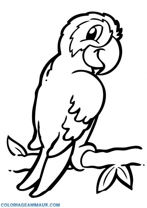 Coloriage Petit Perroquet Avec Un Regard Malicieux À Imprimer concernant Coloriage De Perroquet A Imprimer Gratuit