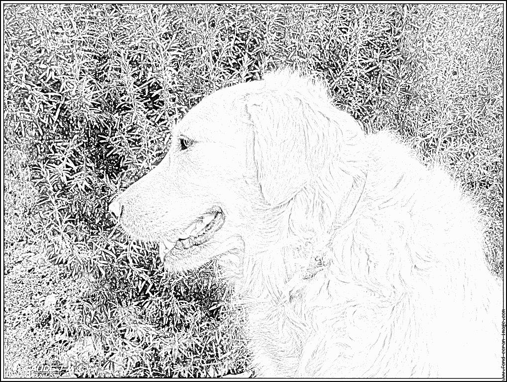 Coloriage Profil De Vaya 0646 À Imprimer Pour Les Enfants intérieur Dessin De Golden Retriever A Imprimer