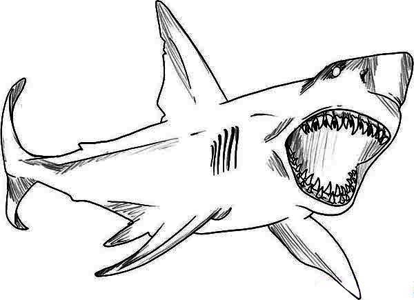 Coloriage Requin Blanc - 1001 Animaux serapportantà Requin A Colorier