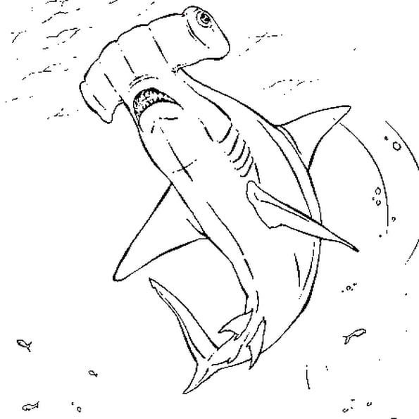 Coloriage Requin Marteau En Ligne Gratuit À Imprimer destiné Requin A Colorier