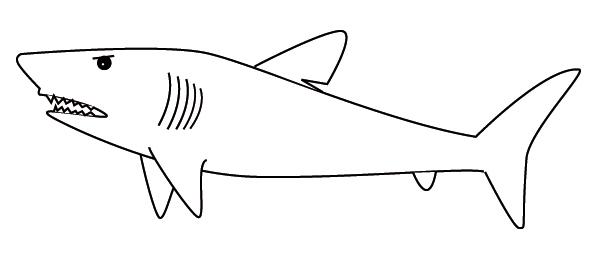 Coloriage Requin pour Requin A Colorier