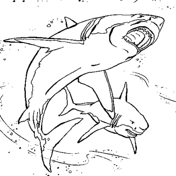 Coloriage Requins En Ligne Gratuit À Imprimer dedans Coloriage Requin