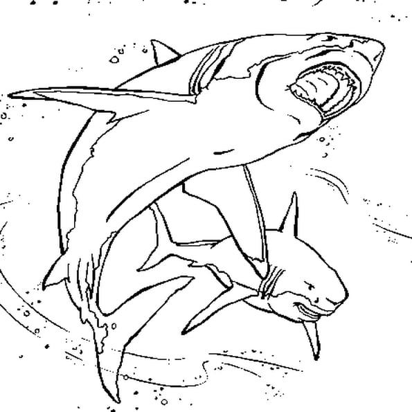 Coloriage Requins En Ligne Gratuit À Imprimer dedans Requin A Colorier