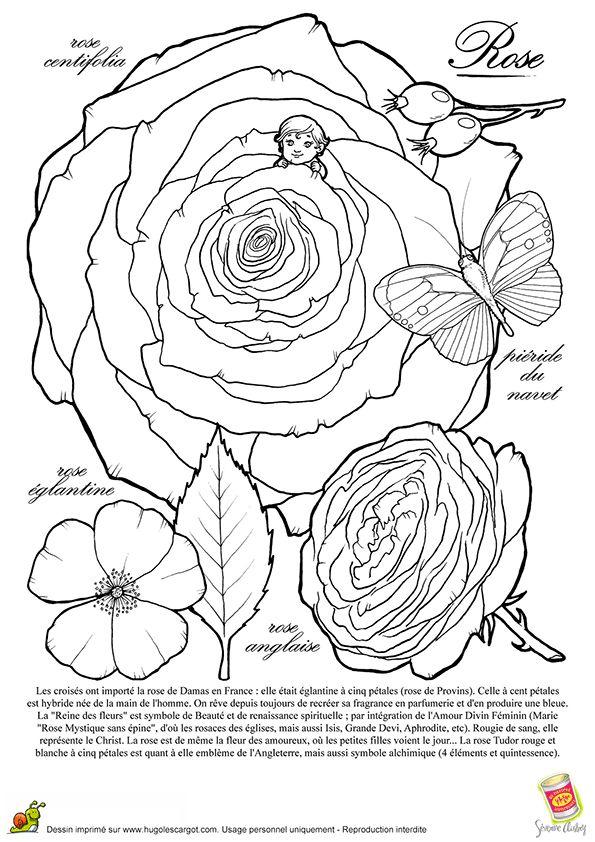 Coloriage Rose Et Rosace (Avec Images) | Coloriage avec Dessin Rosace Fleur