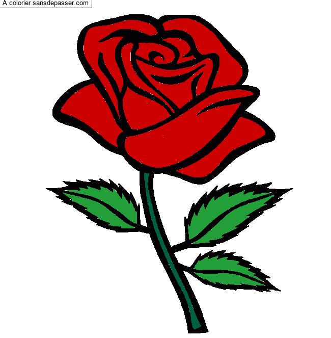 Coloriage Rose Rouge - Sans Dépasser concernant Coloriage D Une Rose