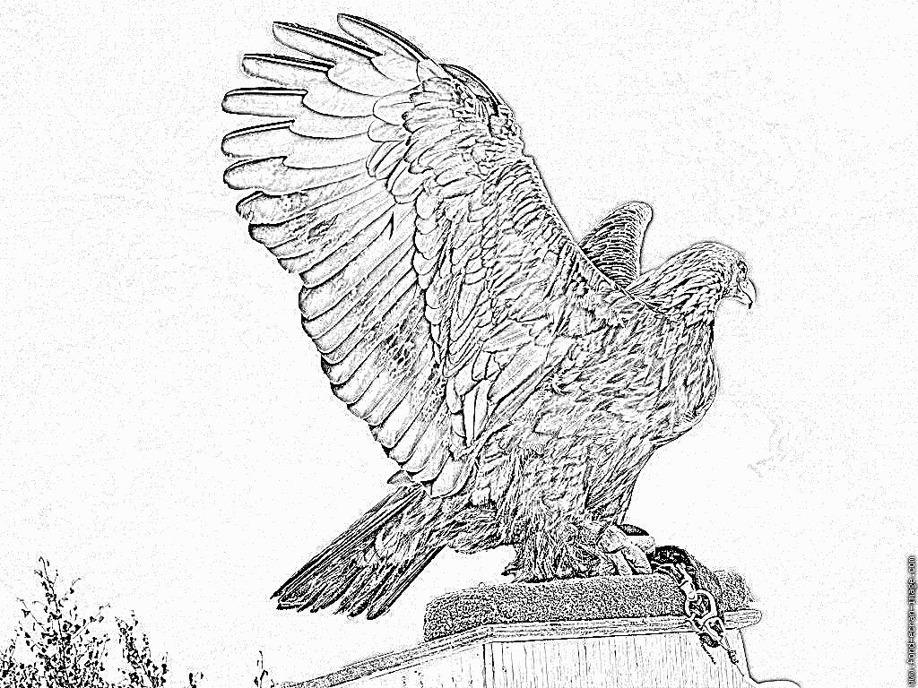 Coloriage Shiva À Imprimer Pour Les Enfants - Dessin pour Coloriage Aigle A Imprimer Gratuit