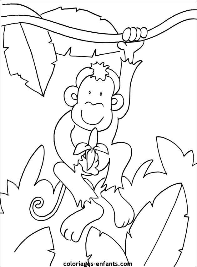 Coloriage Singe Dans La Forêt Dessin Gratuit À Imprimer avec Coloriage Kangourou A Imprimer Gratuit