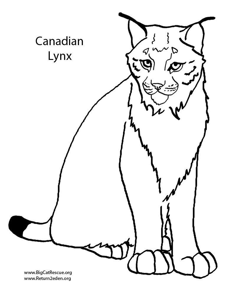 Coloriage Sur Laguerche | Luchs, Fabel Encequiconcerne dedans Coloriage Labrador A Imprimer
