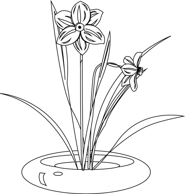 Coloriage, Un Bouquet De Jonquilles - Dory.fr Coloriages pour Jonquille Dessin