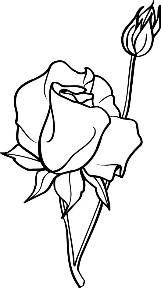 Coloriage : Une Rose Ouverte Et Bouton De Rose - Dory.fr intérieur Dessin De Rose A Imprimer