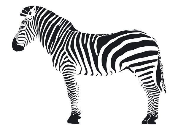 Coloriage Zebre - Recherche Google   Zebre Dessin, Clipart pour Image De Dessin A Dessiner
