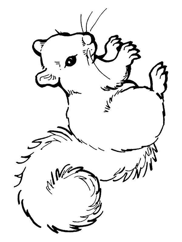 Coloriage204: Coloriage Écureuil À Imprimer pour Coloriage Écureuil À Imprimer