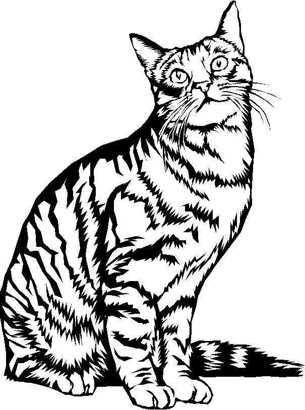 Coloriages À Imprimer : Chat, Numéro : 4366 pour Coloriage Chaton A Imprimer