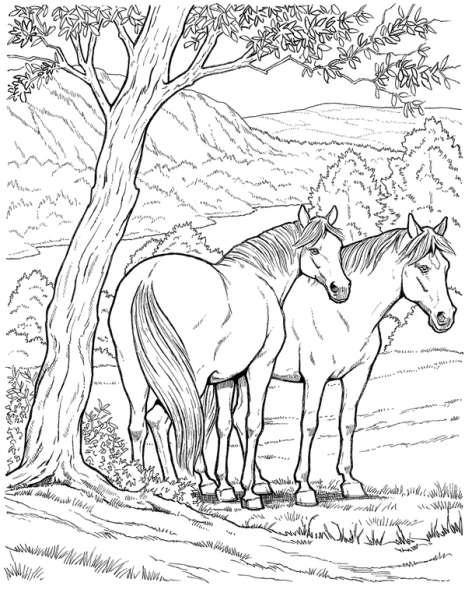 Coloriages À Imprimer : Cheval, Numéro : 3756 pour Coloriages De Chevaux