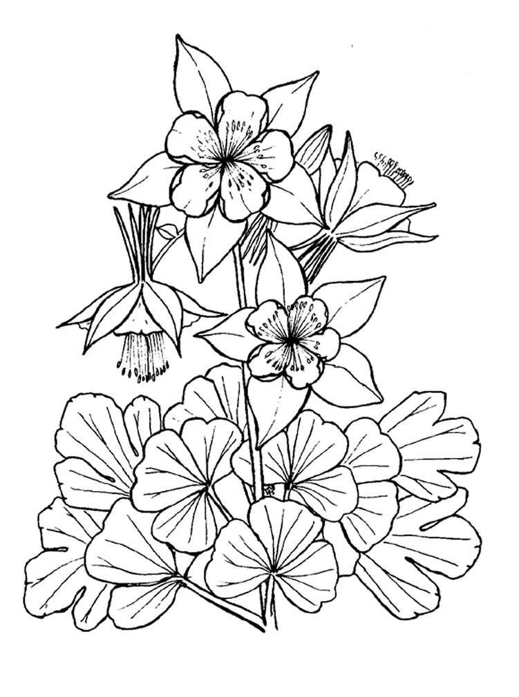 Coloriages À Imprimer : Fleurs, Numéro : 62402 concernant Coloriage Fleur