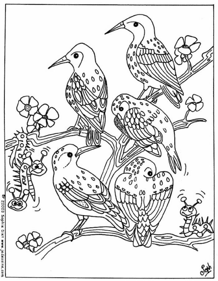 Coloriages Coloriage D'Oiseaux - Fr.hellokids avec Coloriage De Paon Gratuit A Imprimer