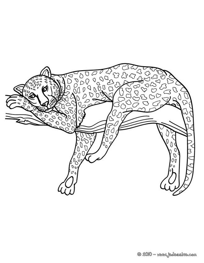 Coloriages Coloriage D'Un Léopard - Fr.hellokids tout Coloriage Panthere