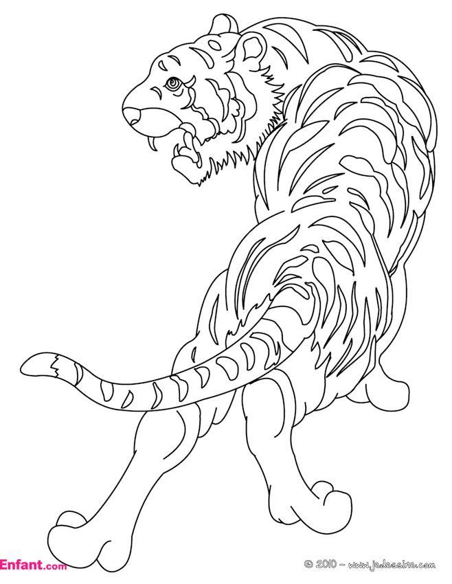 Coloriages Pour Fille: Le Tigre encequiconcerne Coloriage Pour Garçon De 8 Ans
