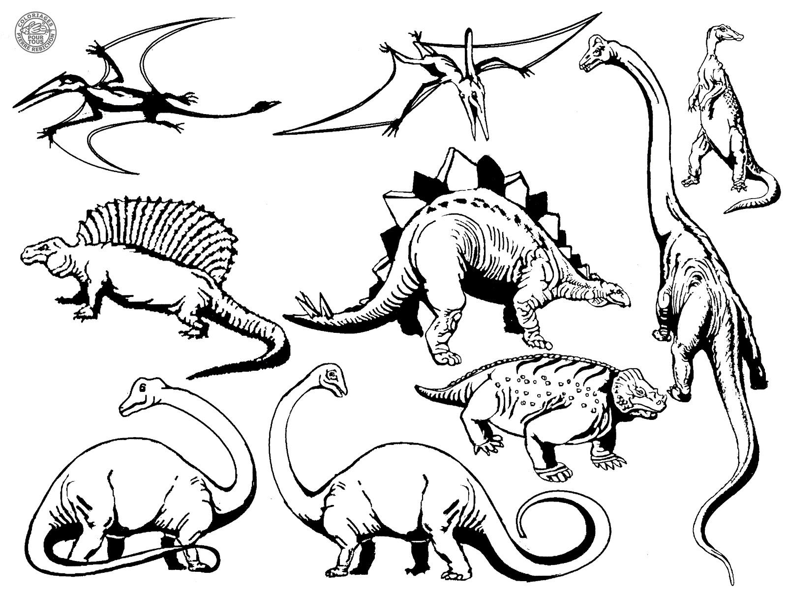 Coloriages Pour Tous: Les Dinosaures serapportantà Coloriage Dinosaure