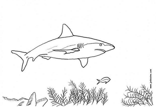 Coloriages Requin Au Fond De La Mer - Fr.hellokids avec Requin A Colorier