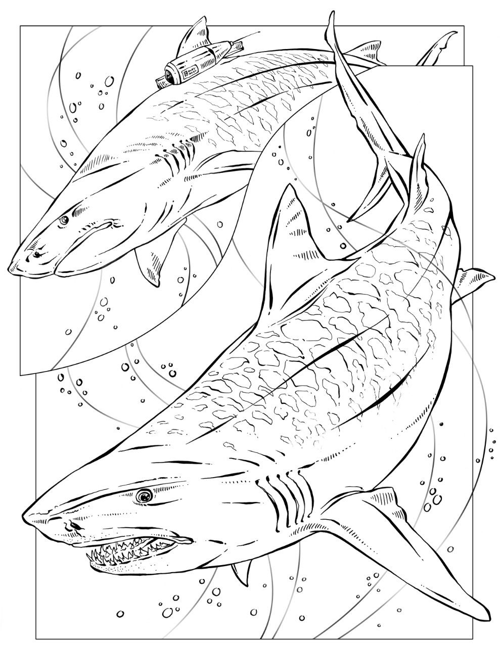 Coloring Book: Animals (J To Z) | Shark Coloring Pages tout Coloriage Requin