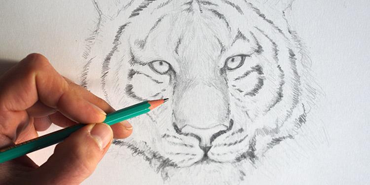 Comment Dessiner Un Tigre En Quelques Traits ?   Apprendre destiné Image De Dessin A Dessiner
