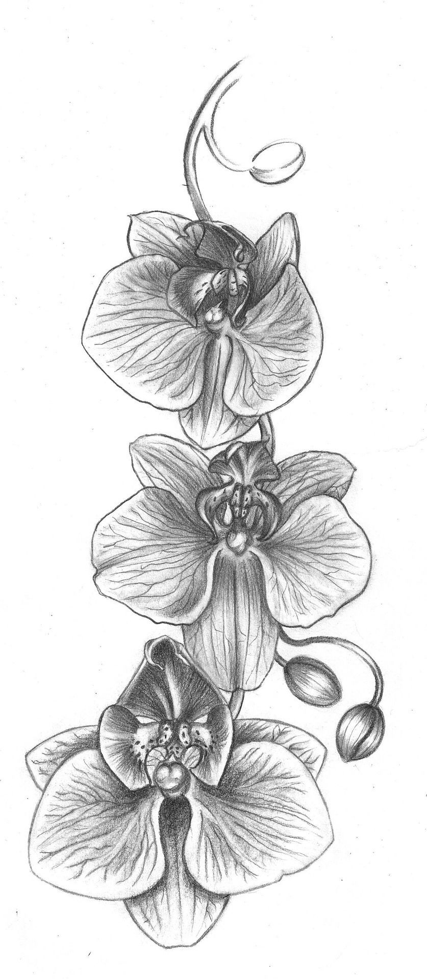 Comment Dessiner Une Fleur Étape Par Étape, Tutoriel De encequiconcerne Dessin Jonquille Fleur