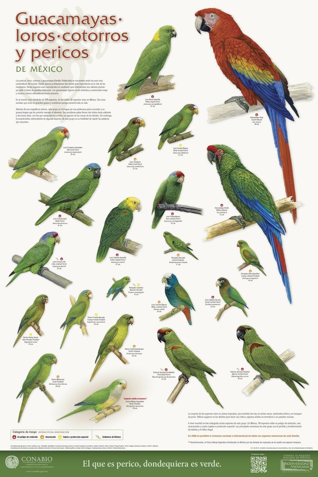Conabio On | Oiseaux Tropicaux, Oiseaux Et Tropical destiné Coloriage Oiseaux Tropicaux