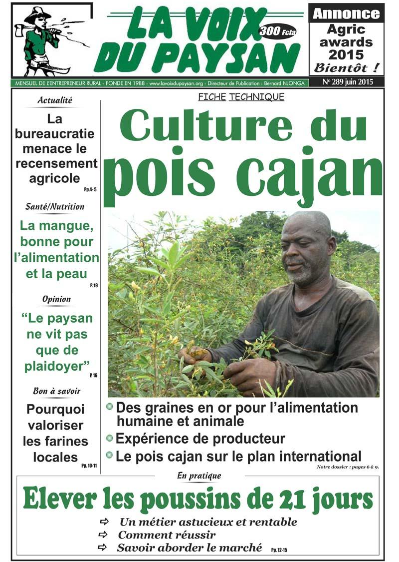 Culture Du Pois Cajan – Saild serapportantà Voix Du Paysan